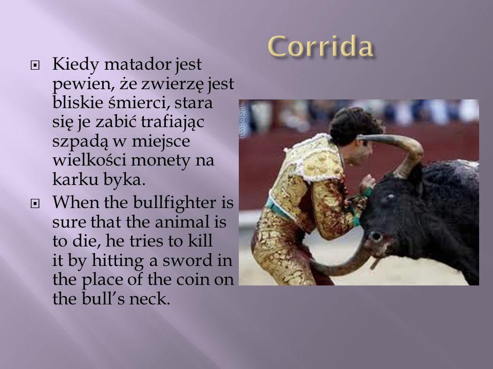 Corrida Kiedy matador jest pewien, że zwierzę jest bliskie śmierci, stara się je zabić trafiając szpadą w miejsce wielkości monety na karku byka.