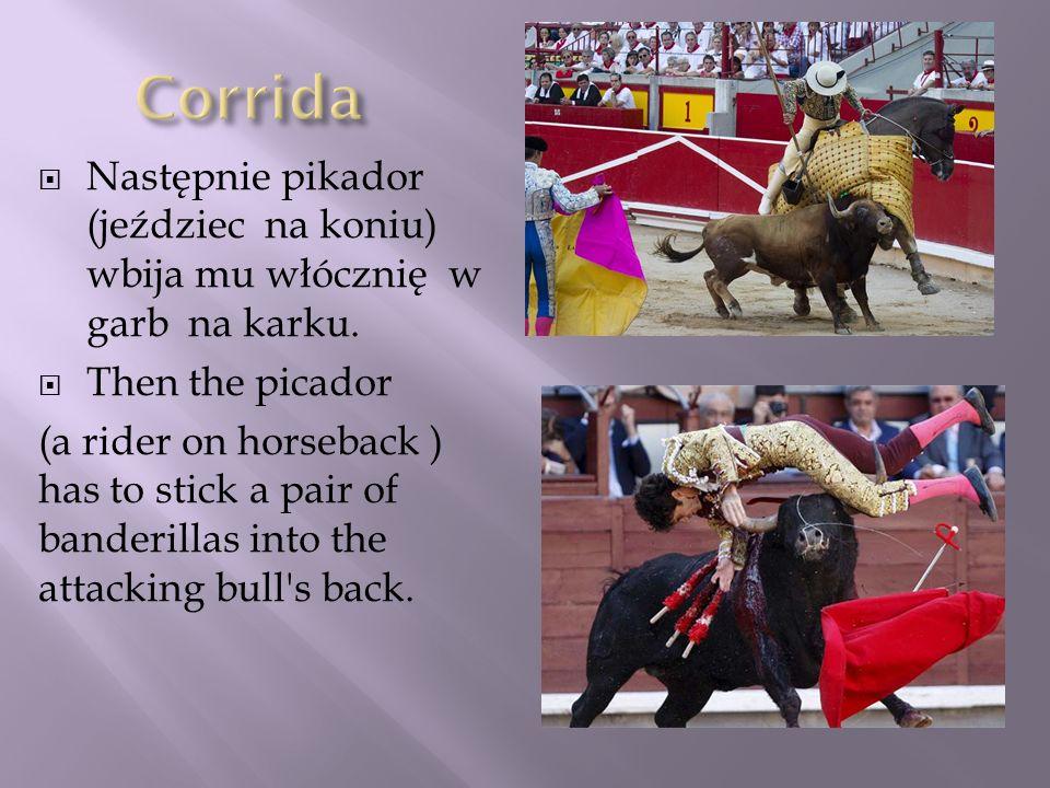 Corrida Następnie pikador (jeździec na koniu) wbija mu włócznię w garb na karku. Then the picador