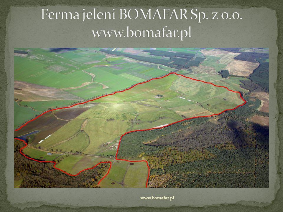 Ferma jeleni BOMAFAR Sp. z o.o. www.bomafar.pl