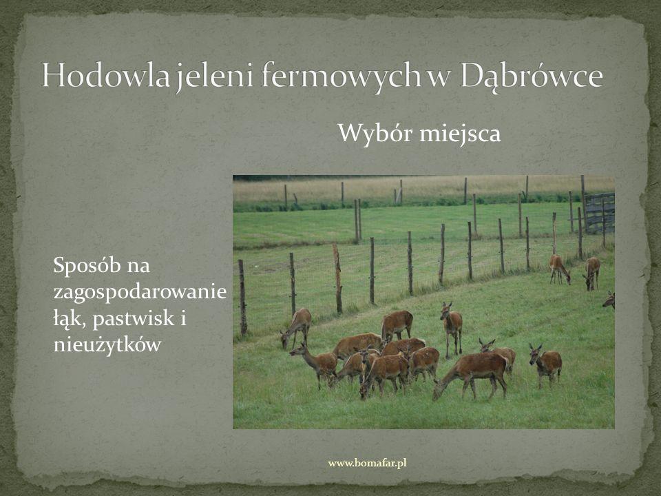 Hodowla jeleni fermowych w Dąbrówce