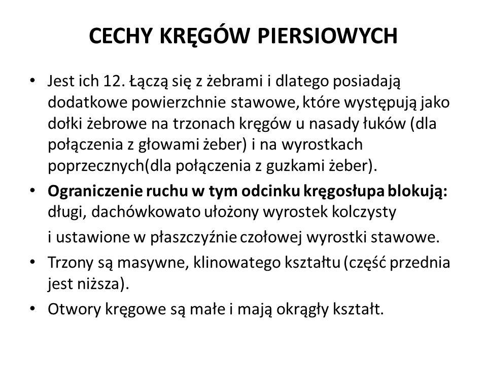 CECHY KRĘGÓW PIERSIOWYCH