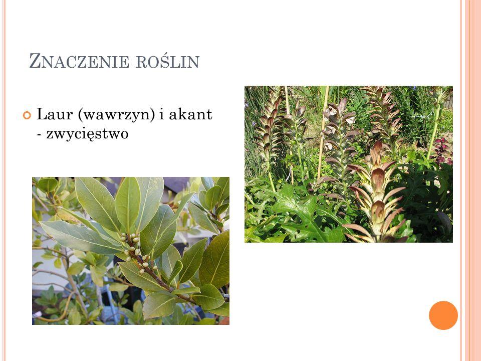 Znaczenie roślin Laur (wawrzyn) i akant - zwycięstwo