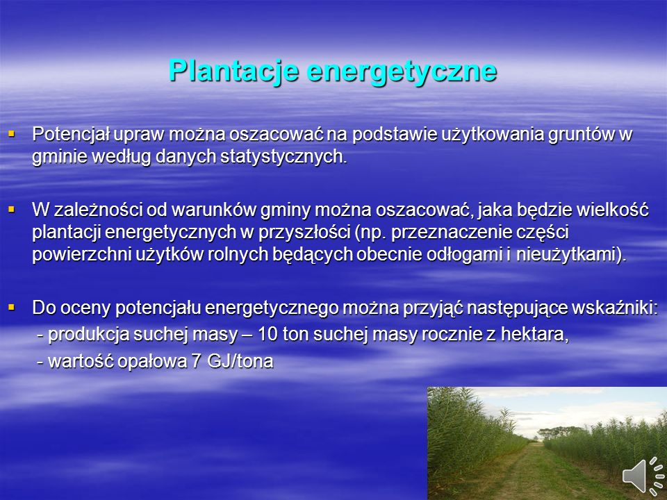 Plantacje energetyczne