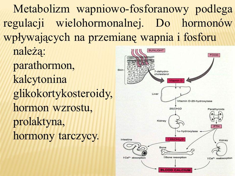 Metabolizm wapniowo-fosforanowy podlega regulacji wielohormonalnej