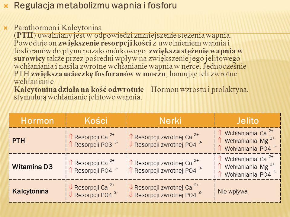 Hormon Kości Nerki Jelito