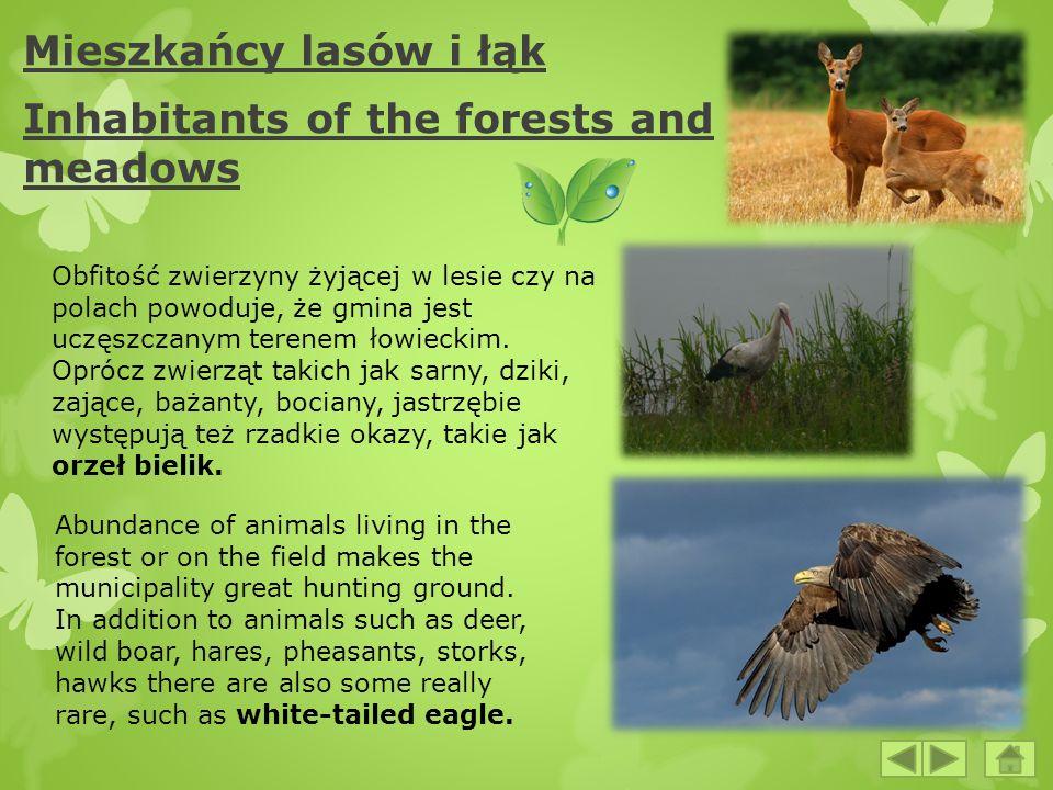 Mieszkańcy lasów i łąk Inhabitants of the forests and meadows