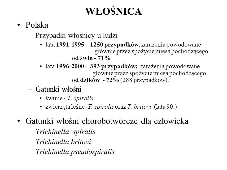 WŁOŚNICA Polska Gatunki włośni chorobotwórcze dla człowieka