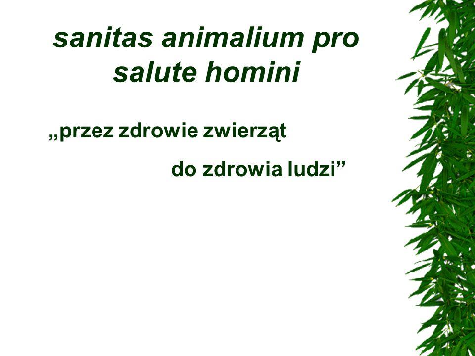 sanitas animalium pro salute homini