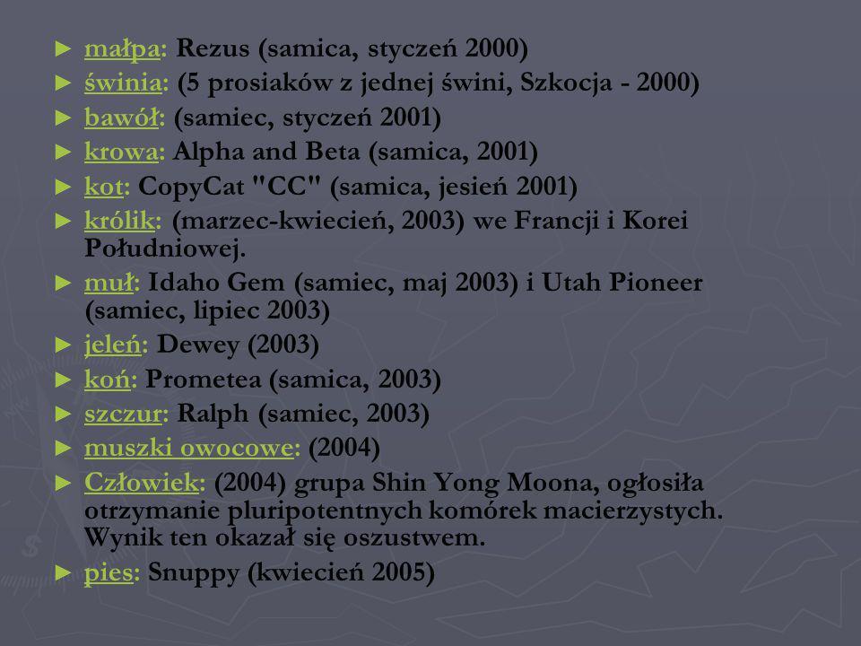 małpa: Rezus (samica, styczeń 2000)