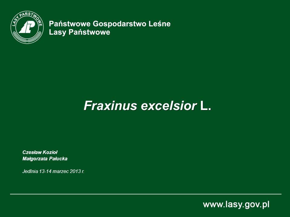 Fraxinus excelsior L. Czesław Kozioł Małgorzata Pałucka