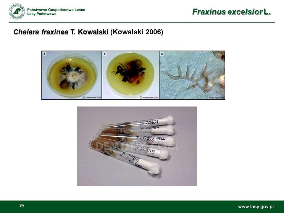 Fraxinus excelsior L. Chalara fraxinea T. Kowalski (Kowalski 2006)