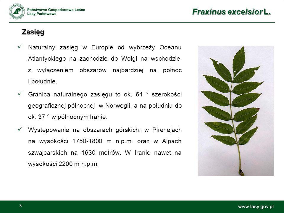 Fraxinus excelsior L. Zasięg