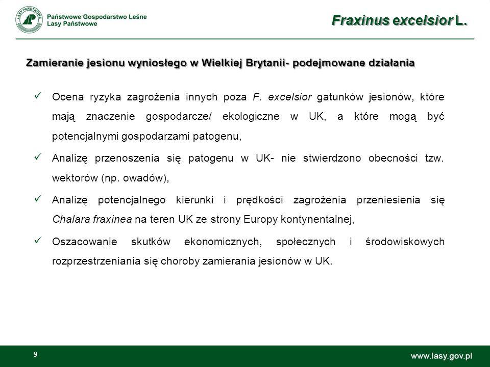 Fraxinus excelsior L. Zamieranie jesionu wyniosłego w Wielkiej Brytanii- podejmowane działania.