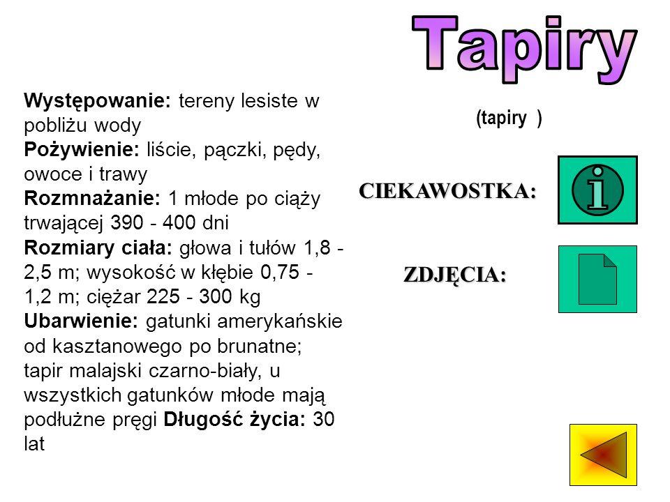 Tapiry CIEKAWOSTKA: ZDJĘCIA: