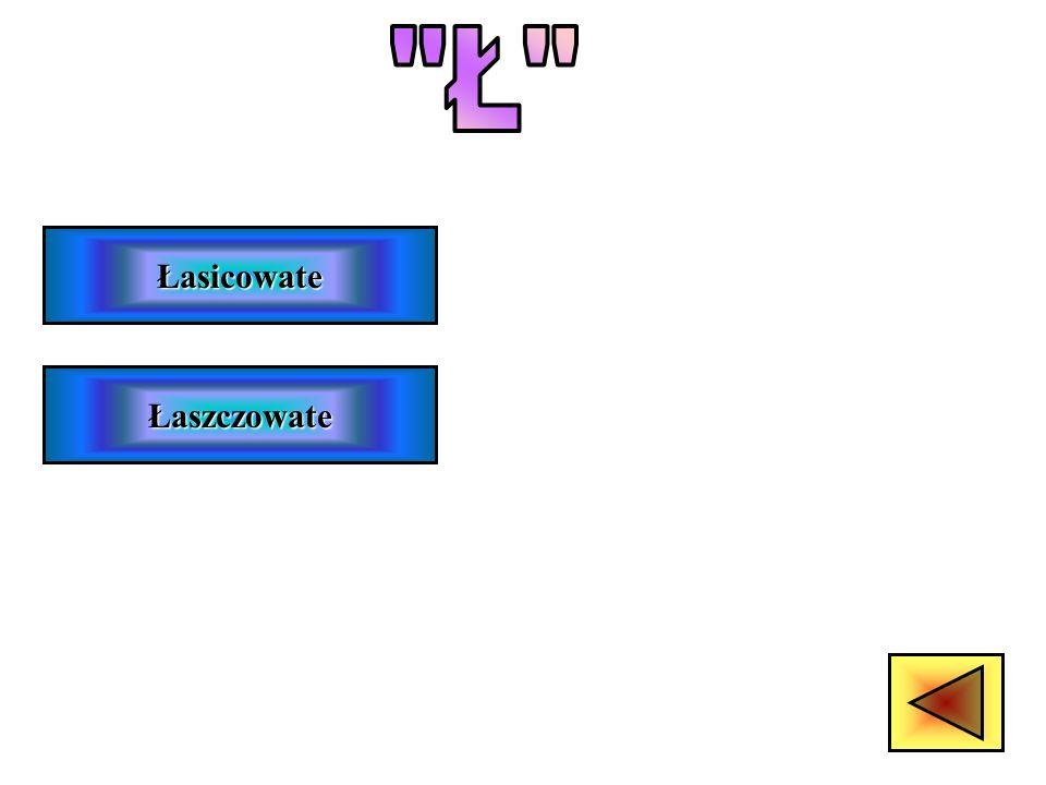 Ł Łasicowate Łaszczowate