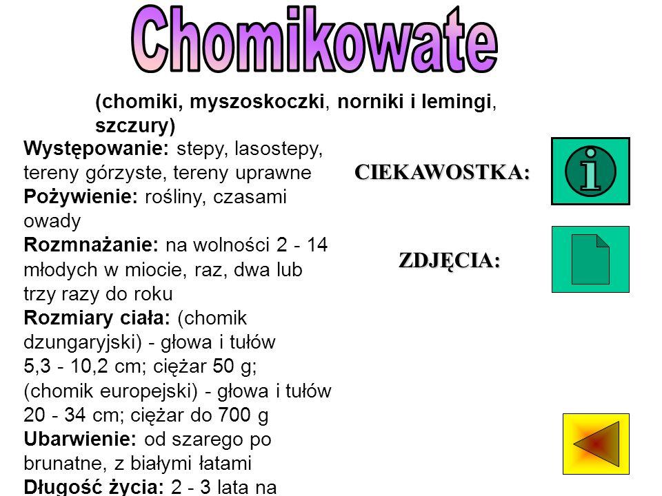 Chomikowate CIEKAWOSTKA: ZDJĘCIA: