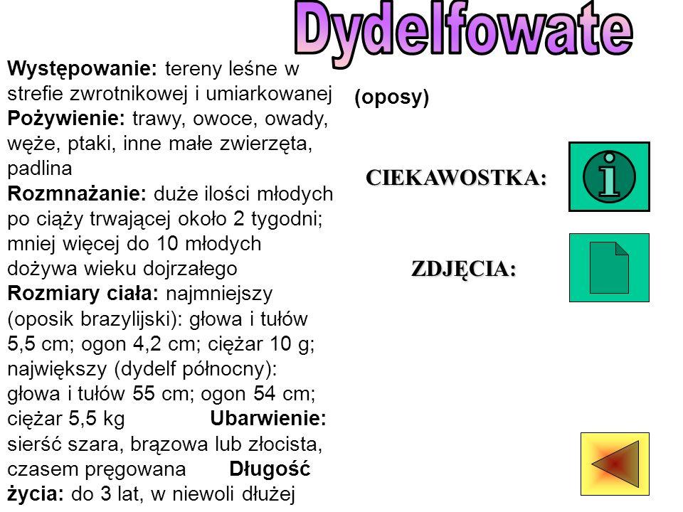 Dydelfowate CIEKAWOSTKA: ZDJĘCIA: