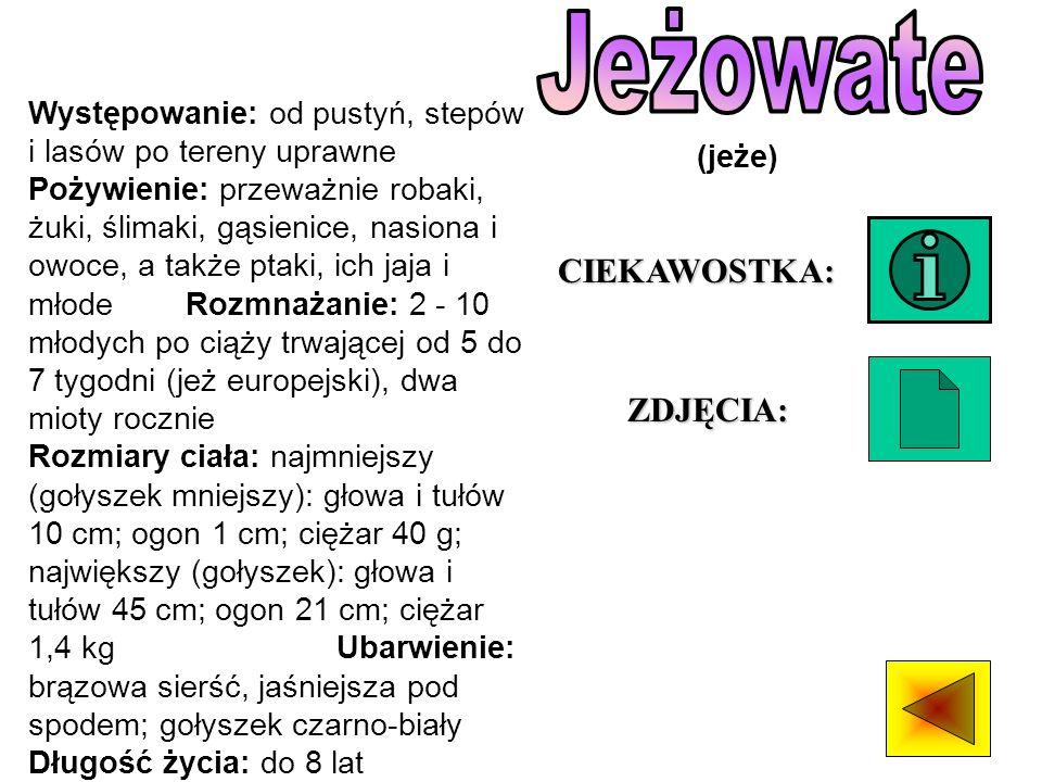 Jeżowate CIEKAWOSTKA: ZDJĘCIA: