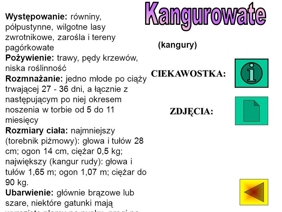 Kangurowate CIEKAWOSTKA: ZDJĘCIA: