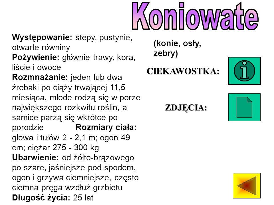 Koniowate CIEKAWOSTKA: ZDJĘCIA:
