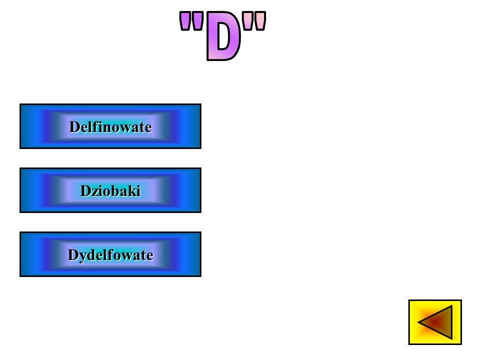 D Delfinowate Dziobaki Dydelfowate