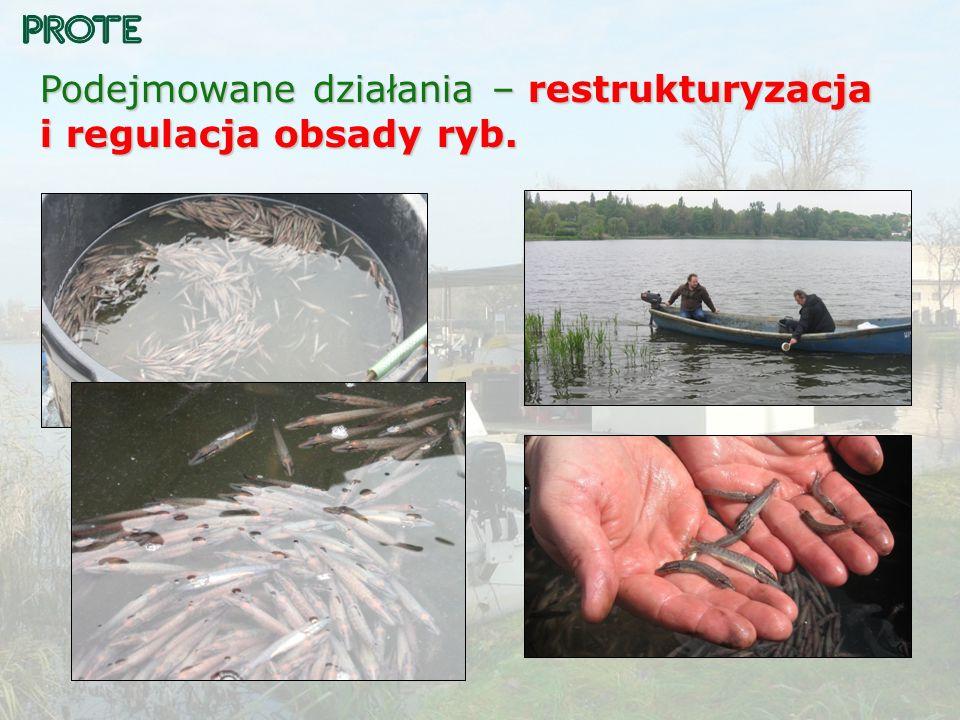Podejmowane działania – restrukturyzacja i regulacja obsady ryb.