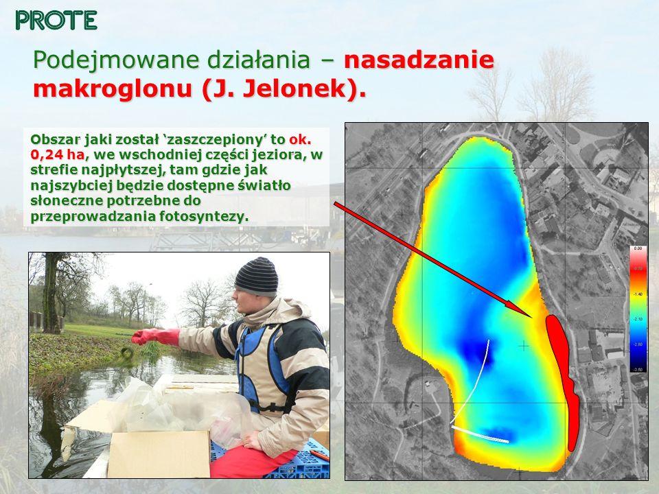 Podejmowane działania – nasadzanie makroglonu (J. Jelonek).