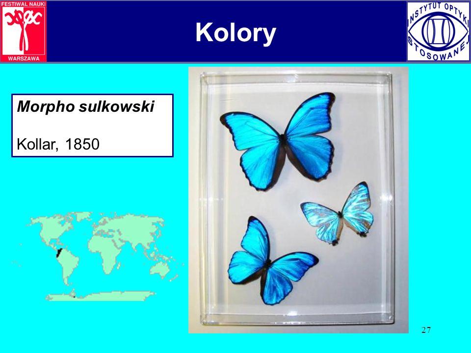 Kolory Kolory Morpho sulkowski Kollar, 1850