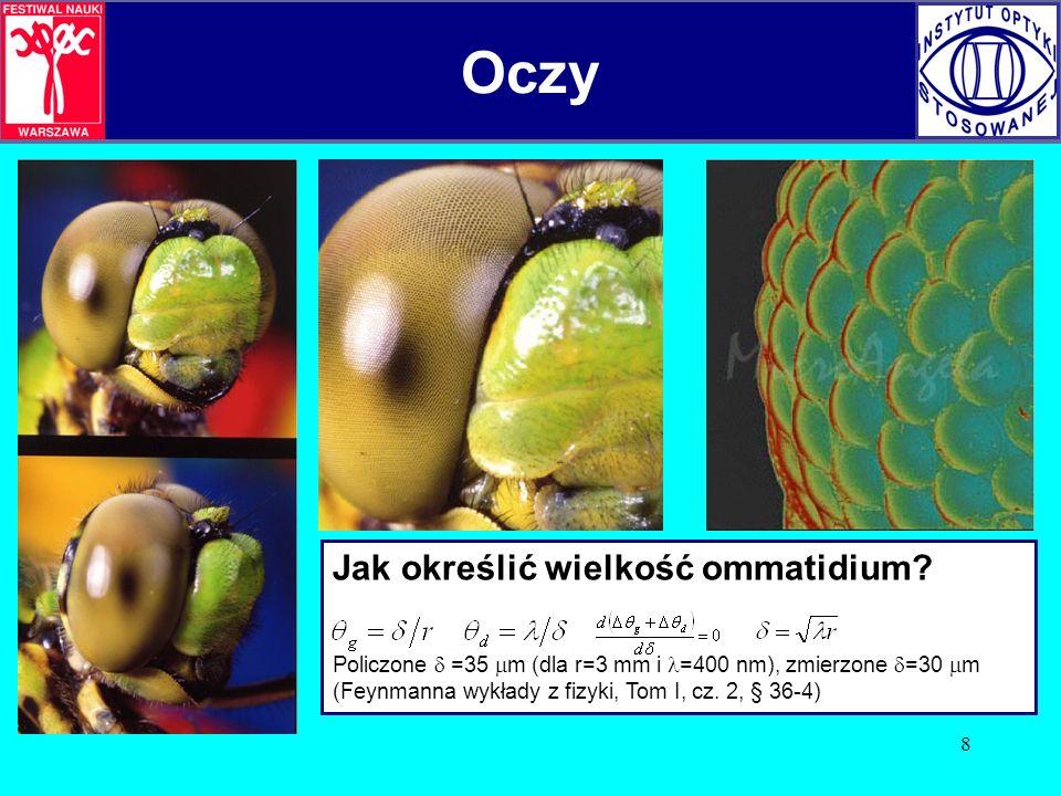 Oczy Oczy Jak określić wielkość ommatidium