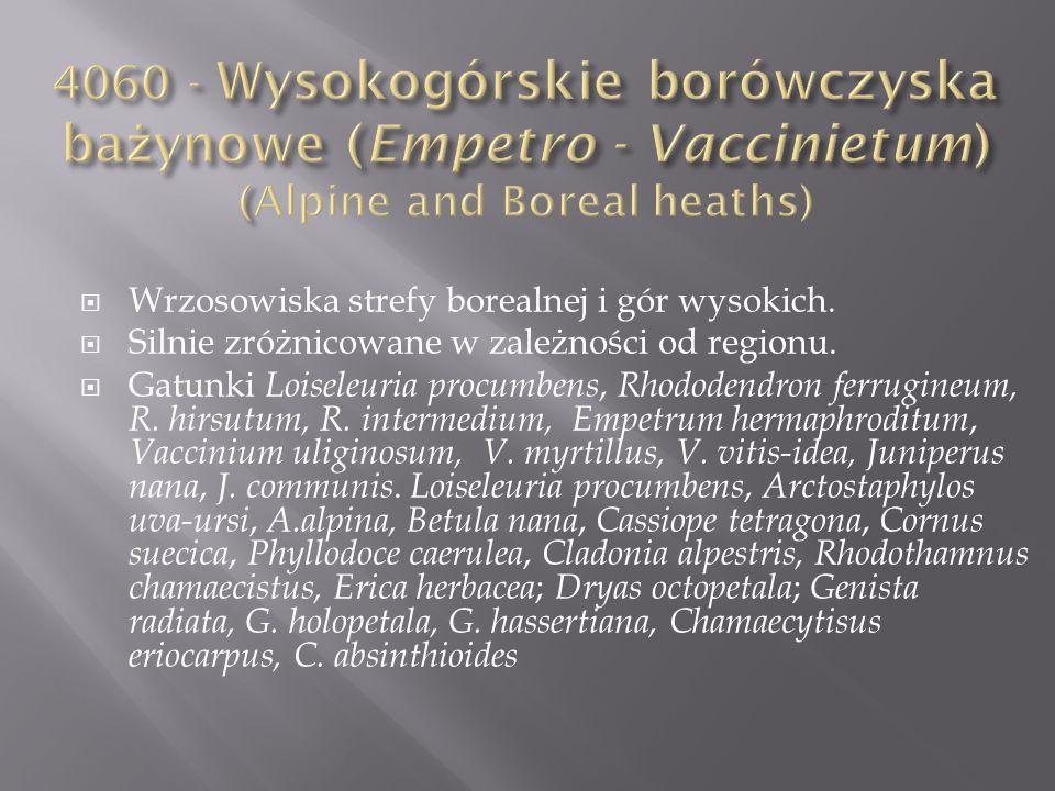 4060 - Wysokogórskie borówczyska bażynowe (Empetro - Vaccinietum) (Alpine and Boreal heaths)
