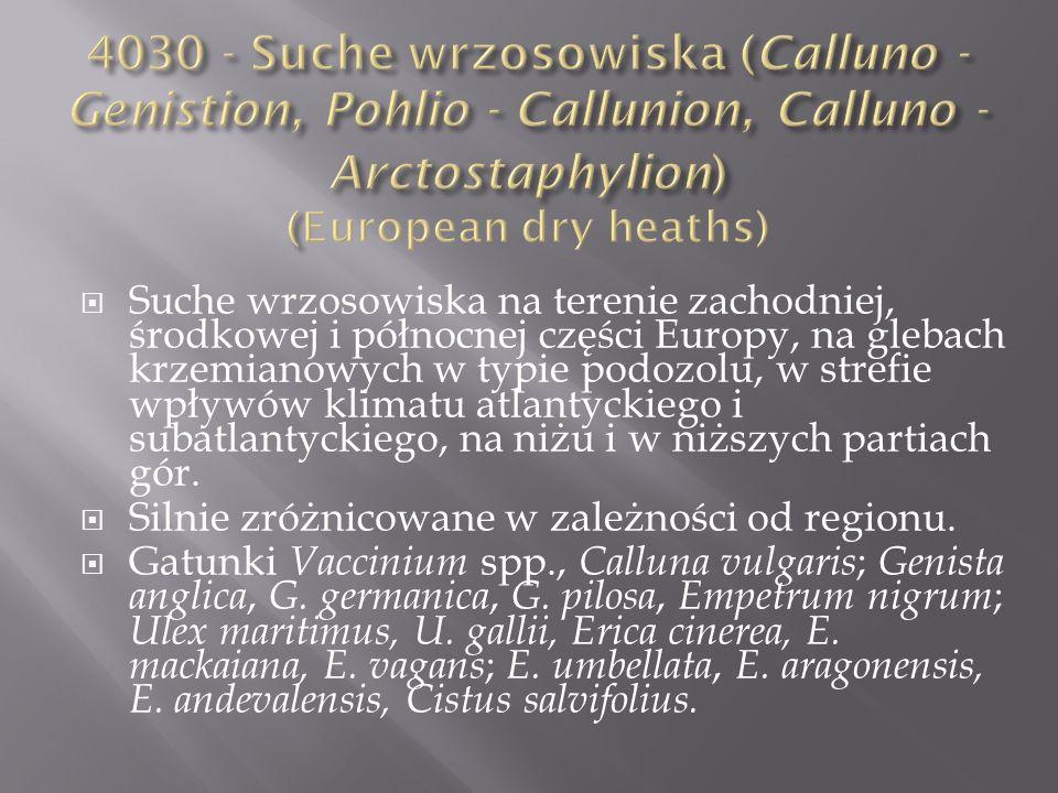 4030 - Suche wrzosowiska (Calluno - Genistion, Pohlio - Callunion, Calluno - Arctostaphylion) (European dry heaths)