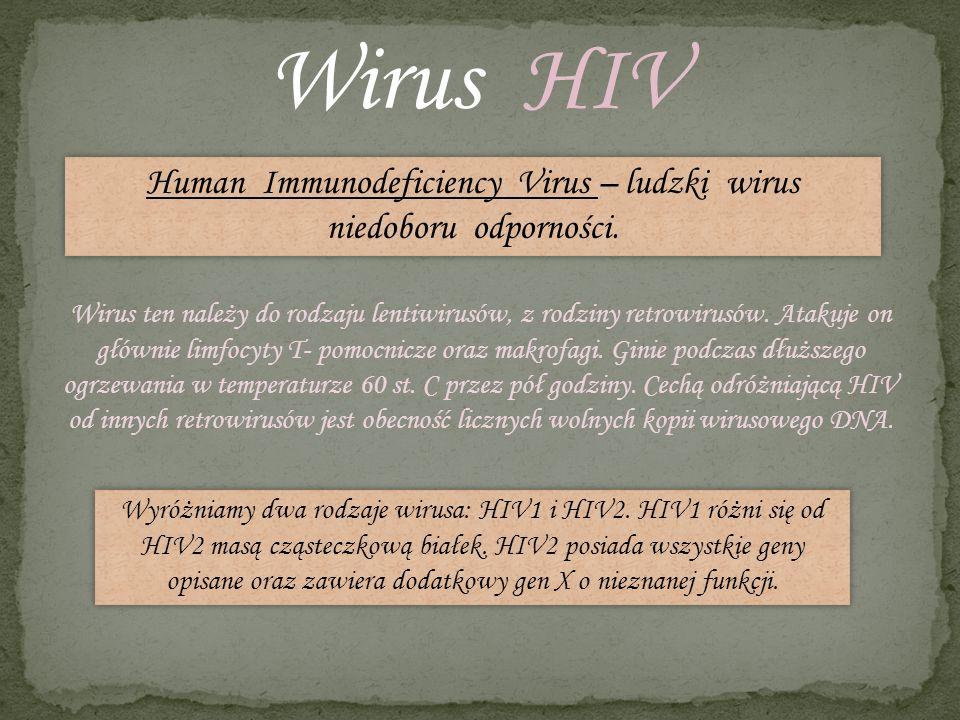 Human Immunodeficiency Virus – ludzki wirus niedoboru odporności.
