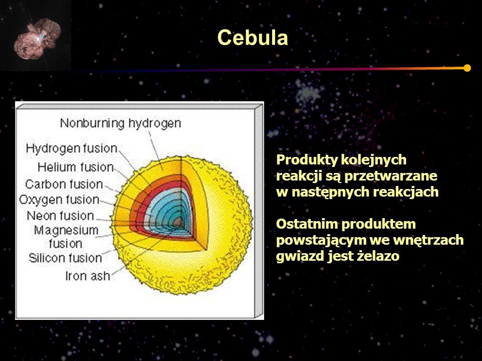 Cebula Produkty kolejnych reakcji są przetwarzane