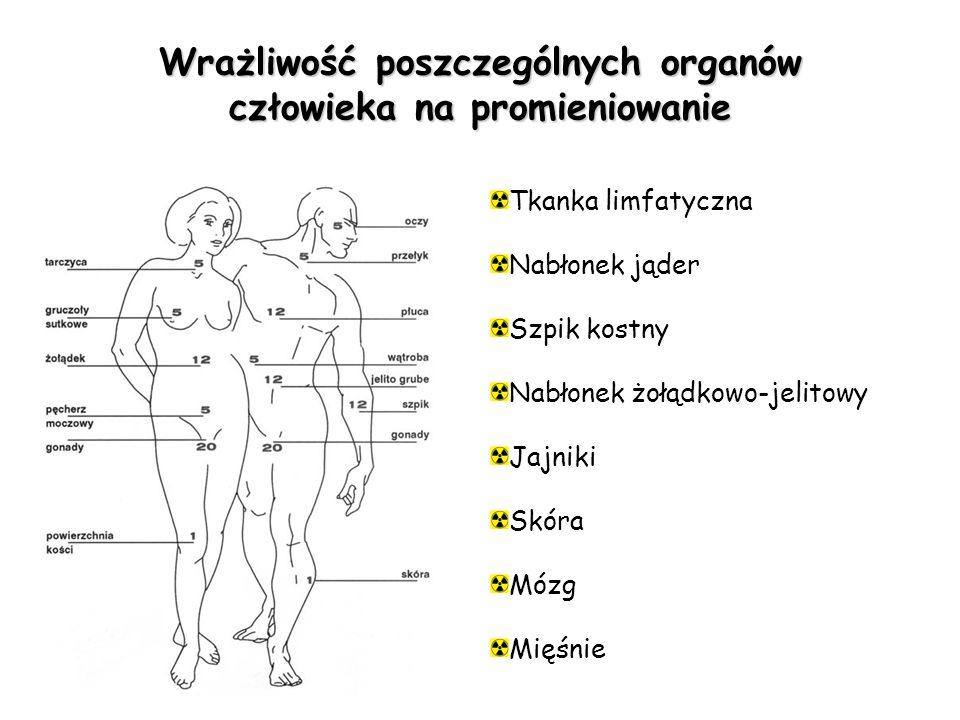 Wrażliwość poszczególnych organów człowieka na promieniowanie