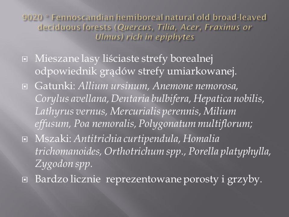 Bardzo licznie reprezentowane porosty i grzyby.
