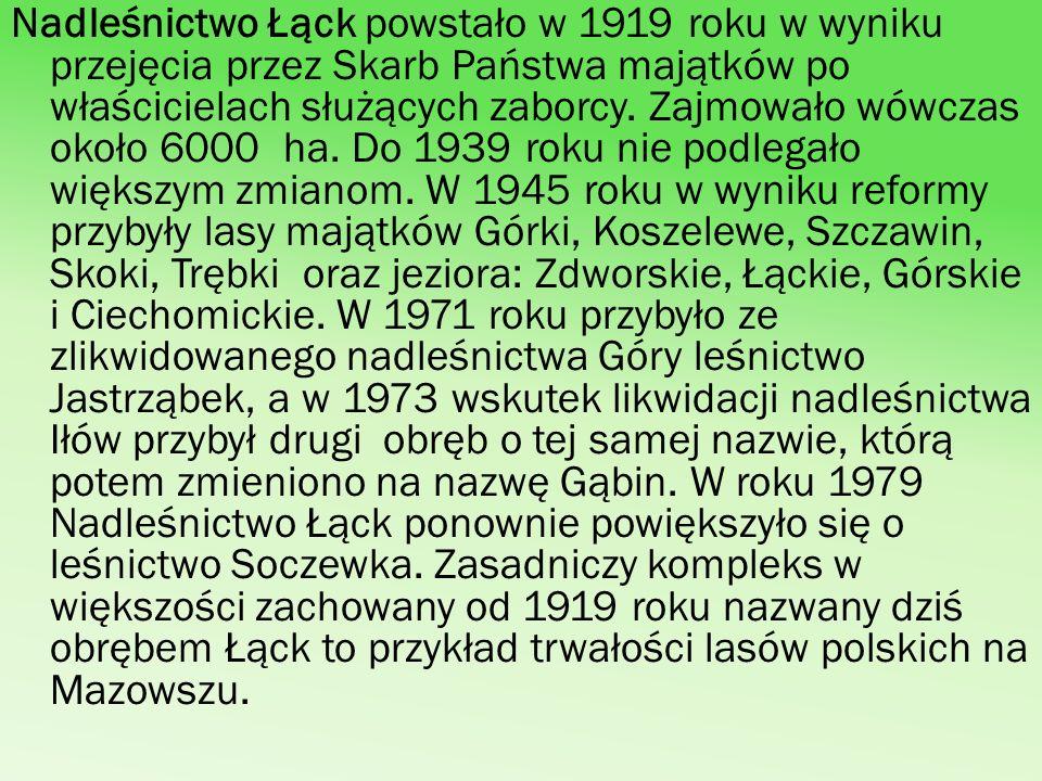 Nadleśnictwo Łąck powstało w 1919 roku w wyniku przejęcia przez Skarb Państwa majątków po właścicielach służących zaborcy.