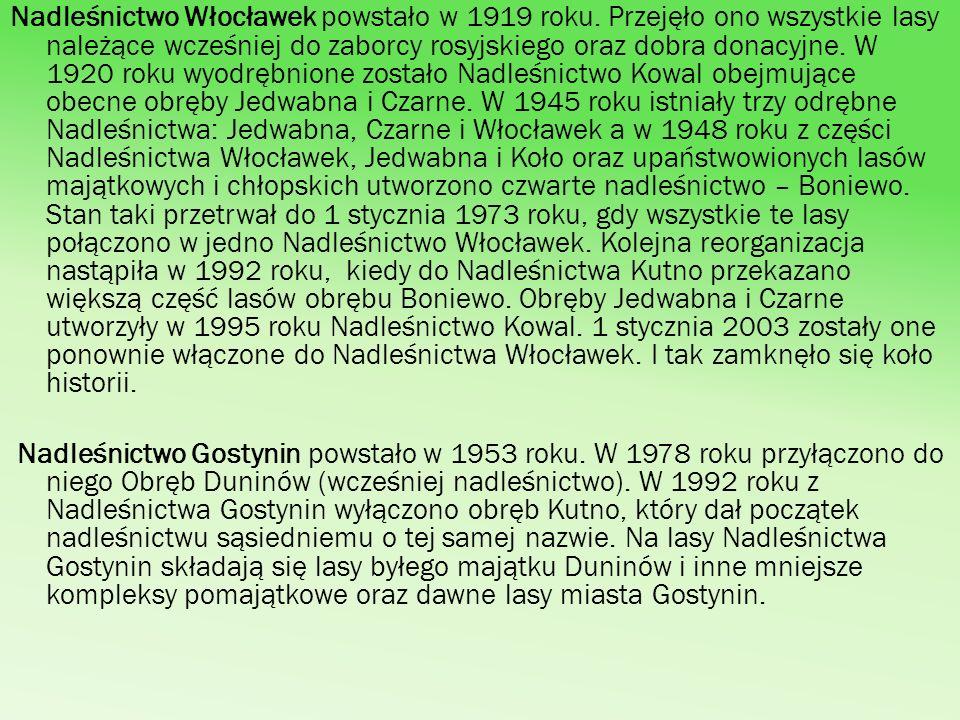 Nadleśnictwo Włocławek powstało w 1919 roku