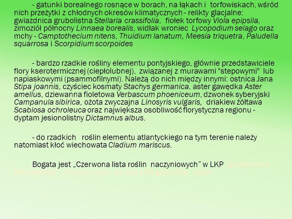 - gatunki borealnego rosnące w borach, na łąkach i torfowiskach, wśród nich przeżytki z chłodnych okresów klimatycznych - relikty glacjalne: gwiazdnica grubolistna Stellaria crassifolia, fiołek torfowy Viola epipsila, zimoziół północny Linnaea borealis, widłak wroniec Lycopodium selago oraz mchy - Camptothecium nitens, Thuidium lanatum, Meesia triquetra, Paludella squarrosa i Scorpidium scorpoides