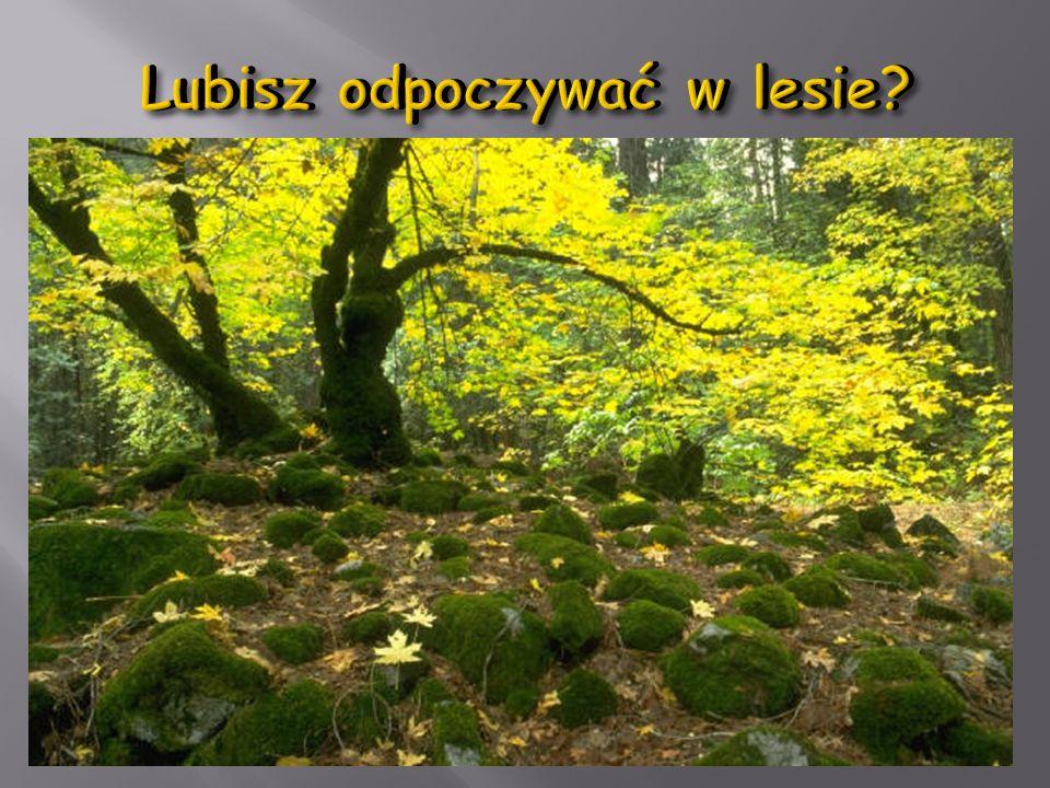 Lubisz odpoczywać w lesie