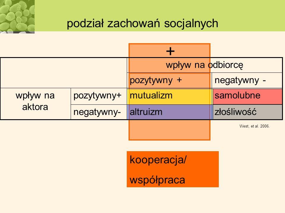 podział zachowań socjalnych