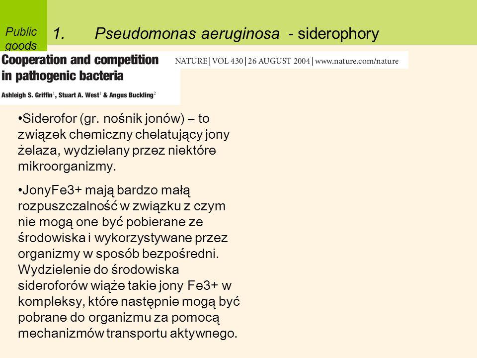 Pseudomonas aeruginosa - siderophory