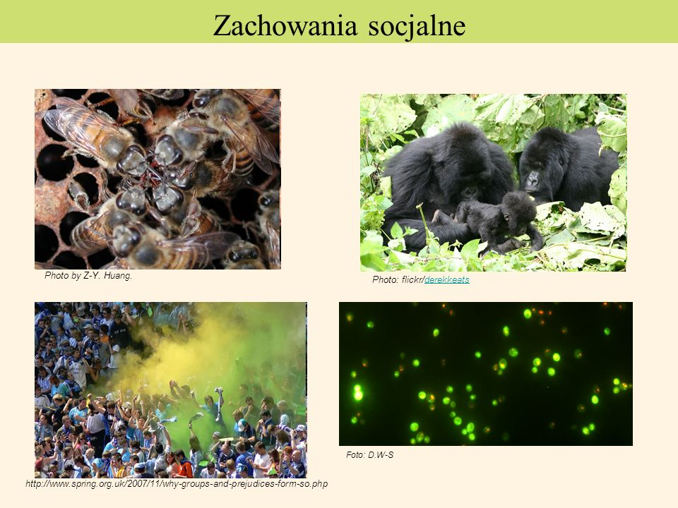 Zachowania socjalne Photo by Z-Y. Huang. Photo: flickr/derekkeats. http://www.spring.org.uk/2007/11/why-groups-and-prejudices-form-so.php.