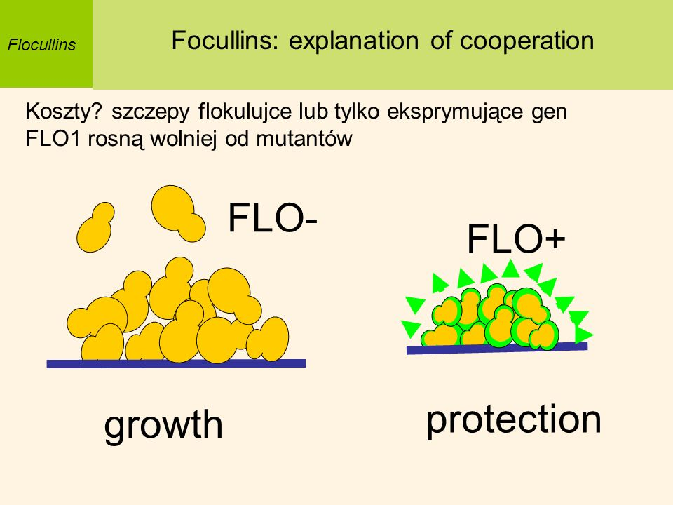Focullins: explanation of cooperation