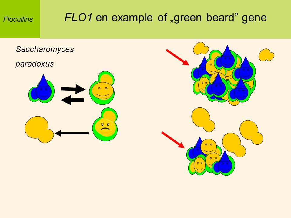 """FLO1 en example of """"green beard gene"""