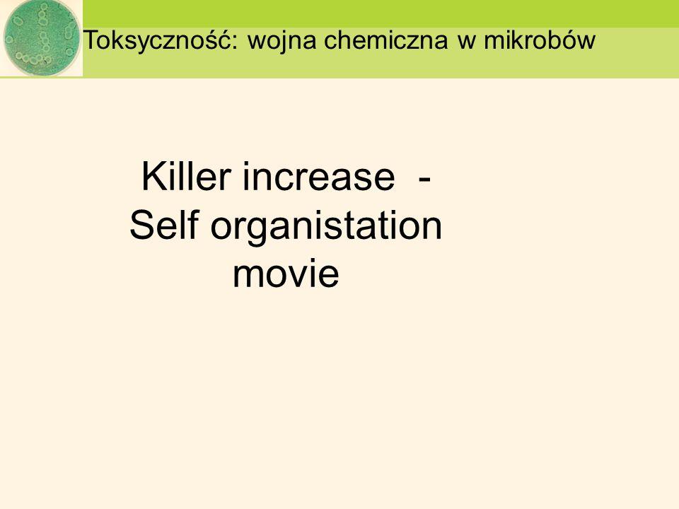 Killer increase - Self organistation movie