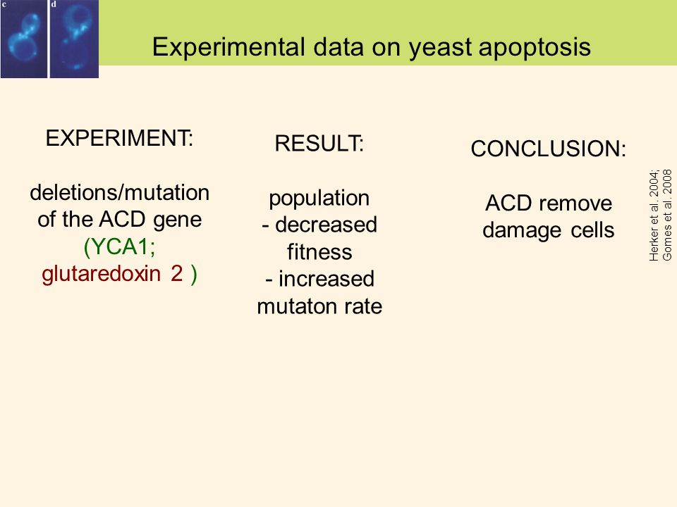Experimental data on yeast apoptosis