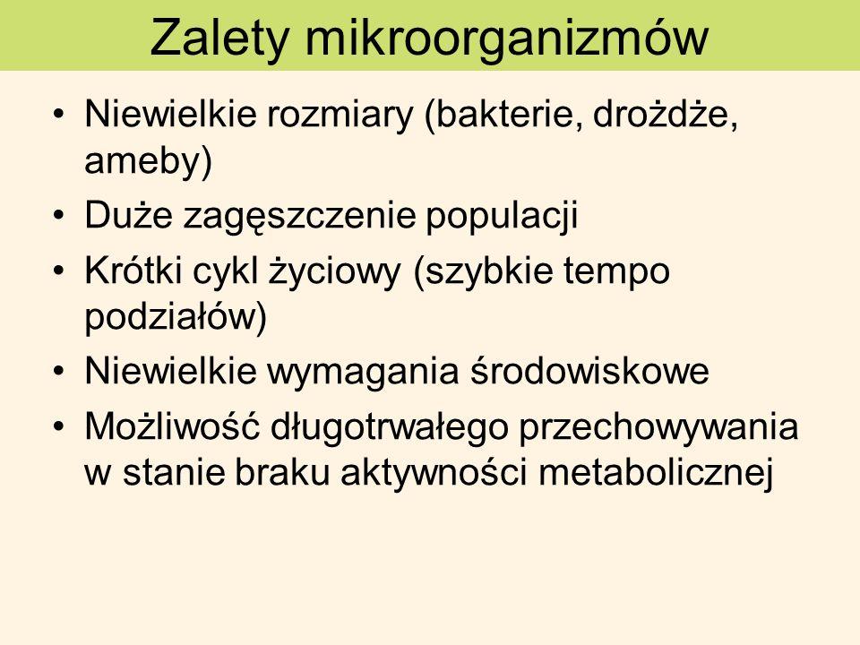 Zalety mikroorganizmów