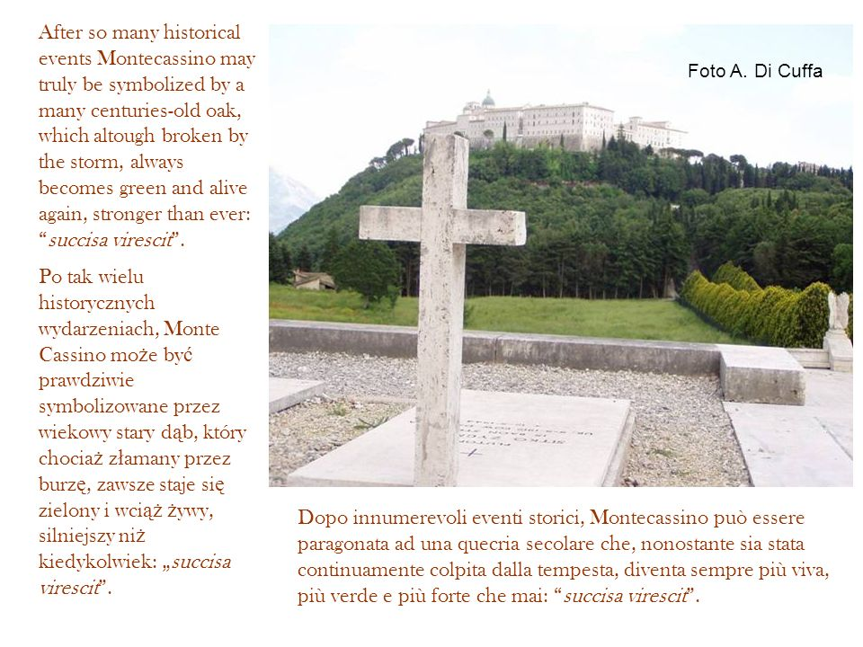 After so many historical events Montecassino may truly be symbolized by a many centuries-old oak, which altough broken by the storm, always becomes green and alive again, stronger than ever: succisa virescit .
