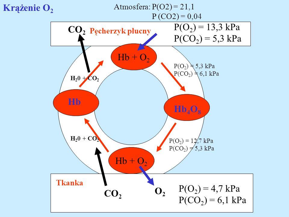 Krążenie O2 P(O2) = 13,3 kPa CO2 P(CO2) = 5,3 kPa Hb + O2 Hb Hb4O8