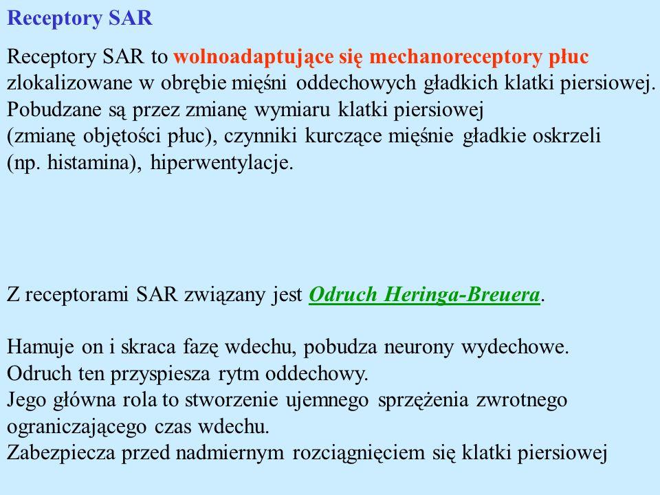 Receptory SAR Receptory SAR to wolnoadaptujące się mechanoreceptory płuc. zlokalizowane w obrębie mięśni oddechowych gładkich klatki piersiowej.